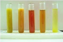 nyuszi narancssárga vizelet, nyuszi vizelet, nyuszi pirosat pisil,narancssárga nyúl vizelet, nyuszi pisi színei