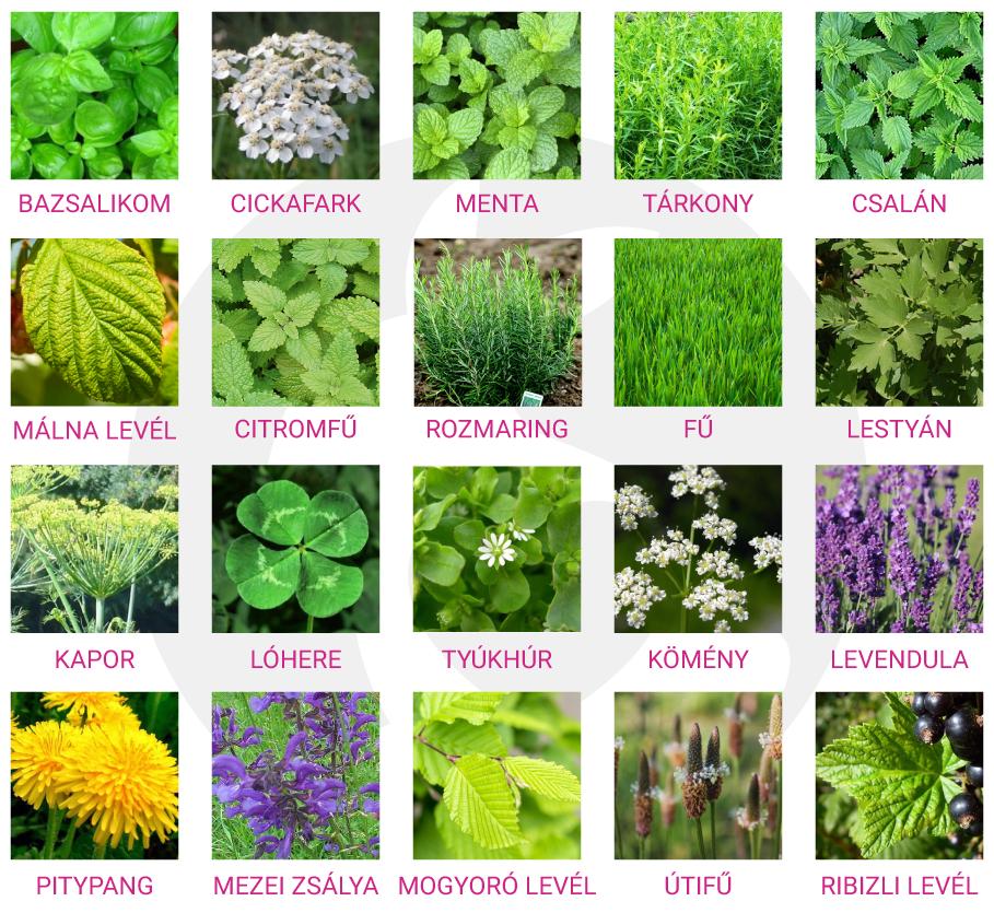 Törpenyuszi fűszernövények, nyúl fűszernövények, nyuszi fűszernövények