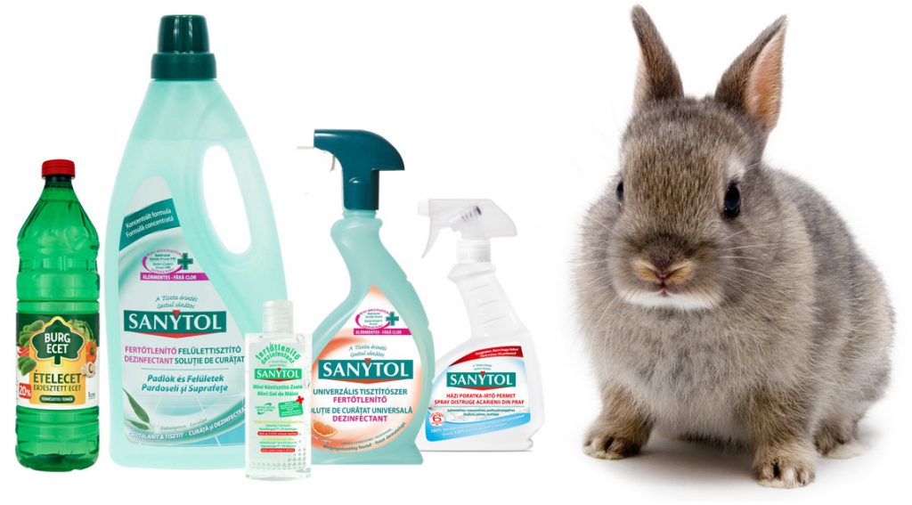 Törpenyúl takarítás, nyuszi takarítás, Sanytol, tisztan tartas, ecet, törpenyuszi takarítás