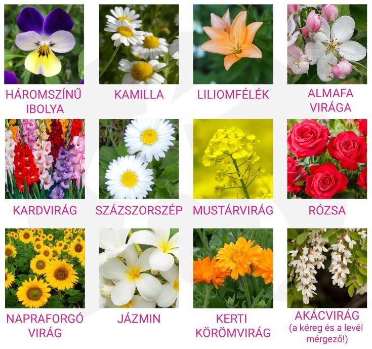nyuszi virágok, nyuszi ehető virágok, nyúl virágok, törpenyúl virágok